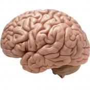 מוח ומזון