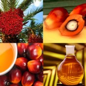 Palm_Oil_and_Tree_Fruit