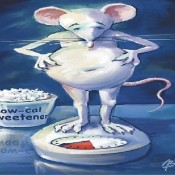 Rat, Sweetener and Scale-600x400